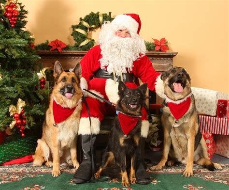 german shepherd mom merry christmas