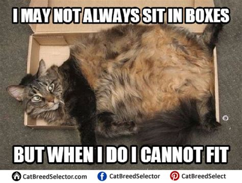 I M Fat Meme - fat cat memes cat breed selector