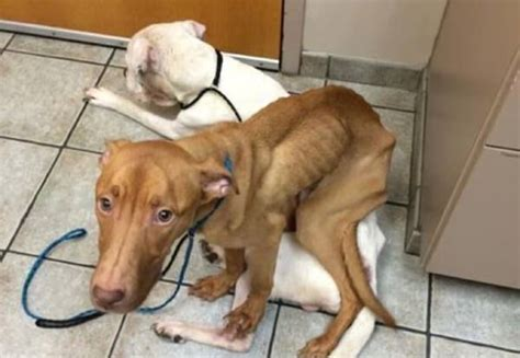abandoned dogs two abandoned dogs survived by the power of love