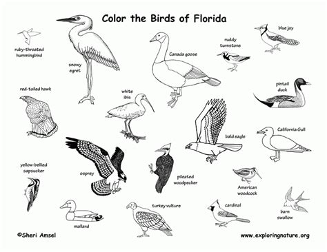 coloring page of florida state bird 7 pics of florida state animal coloring page florida