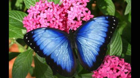imagenes bellas las flores mas hermosas youtube