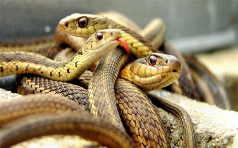 imagenes asombrosas de serpientes galer 237 a de im 225 genes im 225 genes de serpientes