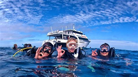 pro dive cairns pro dive cairns great barrier reef scuba diving
