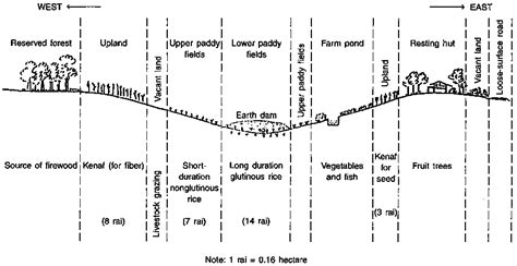 repository pattern ravendb farmer participatory methods for coconut genetic resources