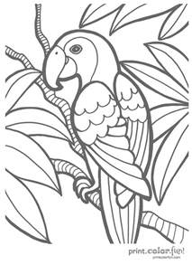 tropical parrot coloring print color fun