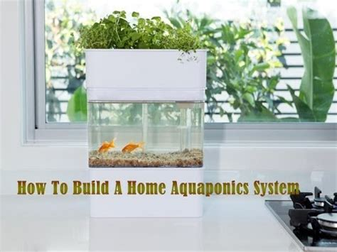 how to create a house how to build a home aquaponics system staring your