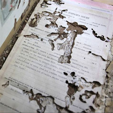 silverfish damage  pages  covers  books