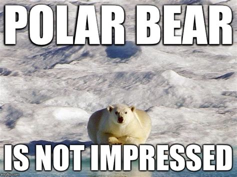Dancing Polar Bear Meme - dancing polar bear meme 28 images this polar bear can