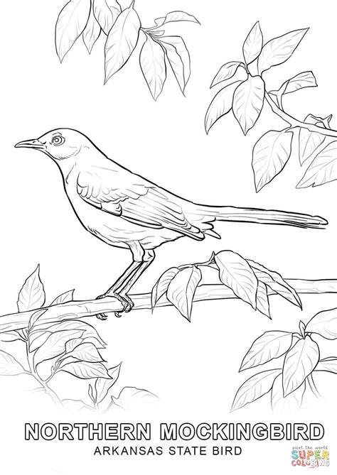 State Bird Coloring Page alabama state bird coloring page coloring home