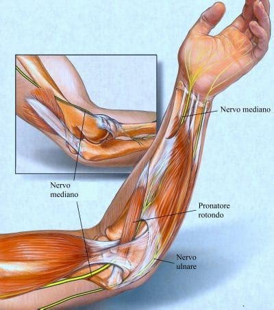 dolore interno braccio sinistro tricipite bicipite e muscoli braccio