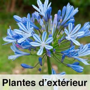 plantes d ext 233 rieur tropicplantes
