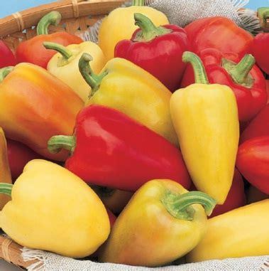 Benih Biji Tanaman Buah Paprika Pepper Sweet California benih paprika antohi 3 biji non retail bibitbunga
