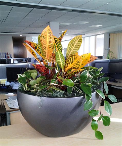 office plants no sunlight office plants create an interesting entrance there are