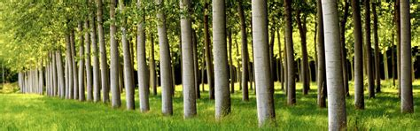 Trees For Paper - pulp paper and packaging mill products sap