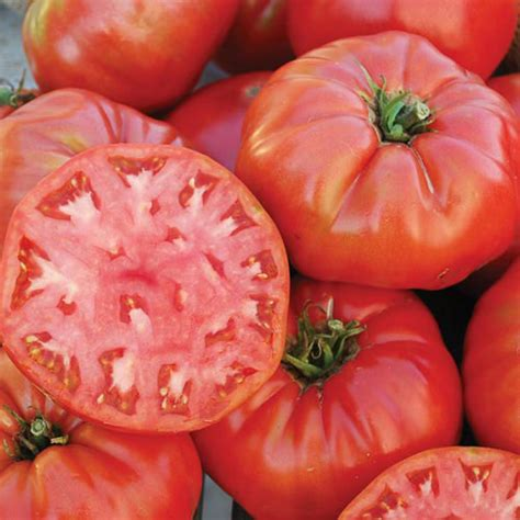 best heirloom seeds beefsteak tomato seeds top heirloom organic varieties