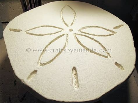 diy sand dollar crafts sand dollar