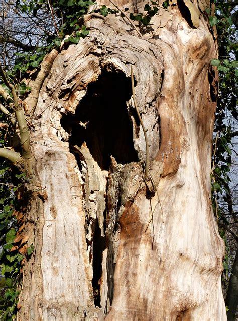 fotos gratis naturaleza bosque rock rama planta