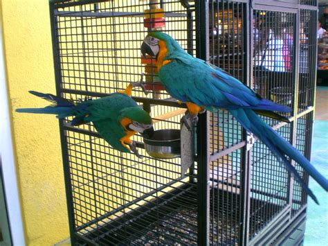 macaw cage  sale size stainless steel