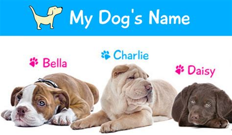 dogs name from up about kyle larson ux designer