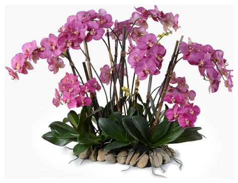 Wedding Flower Arrangement Picture by Picture Of Orchid Flower Arrangements Centerpieces