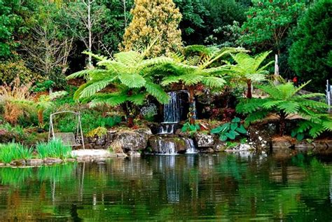 Maleny Botanic Gardens Majestic Tree Ferns Form A Lush Frame Around One Of Our Gorgeous Waterfalls Picture Of Maleny