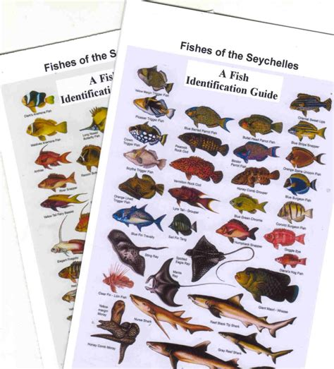 the book a popular guide to the identification and study of our commoner fungi with special emphasis on the edible varieties classic reprint books indian fish fishes maldives zanzibar fish diving books