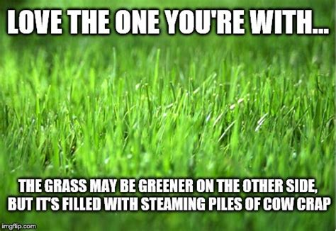 Grass Memes - cow imgflip