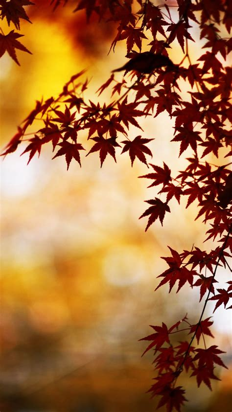 wallpaper iphone 7 autumn wallpapers of the week autumn