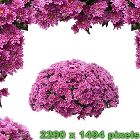 garden bushes with flowers texture png flower bush green