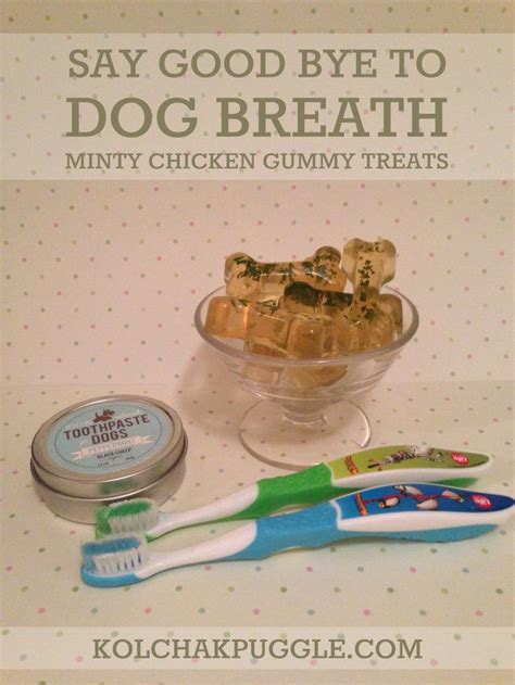 is chicken bad for dogs 25 best ideas about bad breath on leg