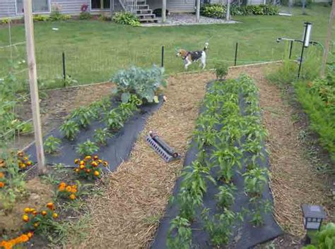 vegetable garden ideas for small yards backyard vegetable garden ideas landscaping backyards ideas