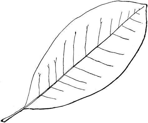 Simple Leaf Outline by Genus Magnolia L Magnolia Clipart Etc