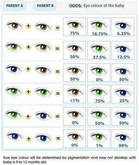 inheritance pattern eye color eye color my style pinterest colors eyes and eye color