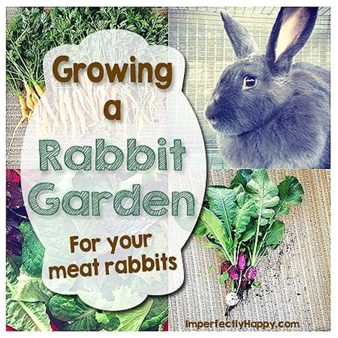 raising meat rabbits your backyard 1000 ideas about rabbit food on pinterest pets at home