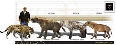 Jaguar Size Compared To Today Arctic Petrel