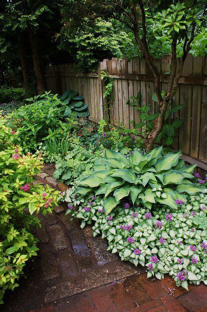 shade plants lamium hosta lamium is an amazing ground