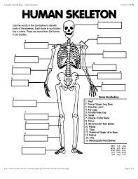 best 25 axial skeleton ideas on pinterest anatomy bones