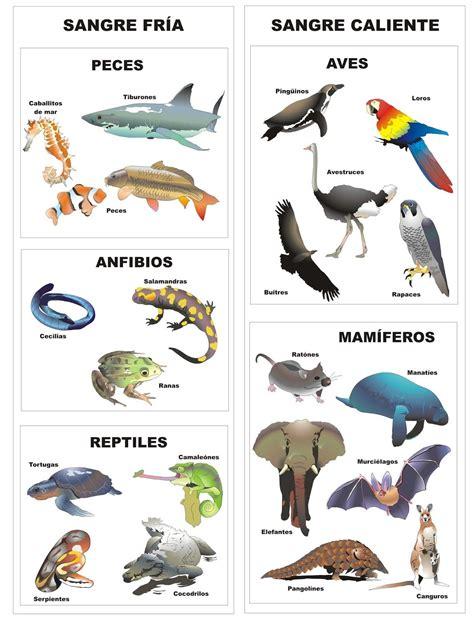 imagenes de animales bertebrados im 225 genes de animales vertebrados para imprimir material