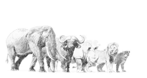 Big 5 Sketches by Big Five Animal Sketch With Pencil Stock