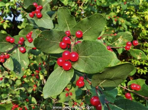 are cherries bad for dogs berries edible or not edible gettystewart