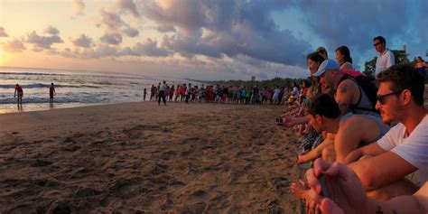 bali sea turtle society kuta indonesia  amazing