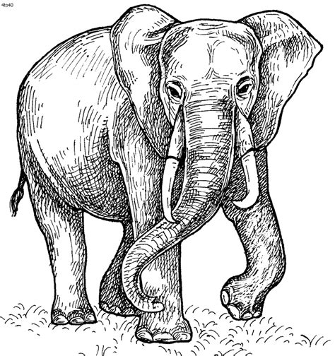 Fil A Coloring Pages by Asian Elephant Coloring Pages Getcoloringpages