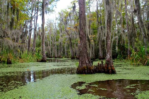 on the bayou here and there on the bayou