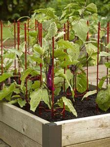 come coltivare i peperoni in vaso come coltivare i peperoni orto e vaso avr 242 cura di te