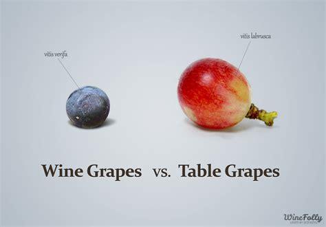 Table Grapes by Table Grapes Vs Wine Grapes Wine Folly