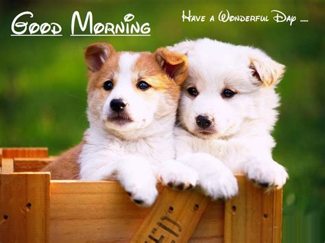 morning puppy puppy to saying morning wallpapers festival chaska