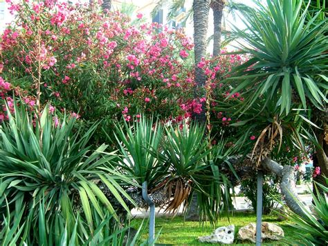 panoramio photo of mediterranean vegetation