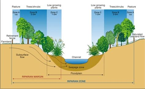 stream cross section glossary of flooding terms a d mo environment blog