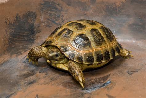 information of animal turtles pet