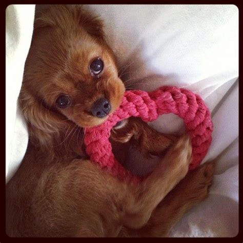 valentines animals 57 best pets images on fluffy pets